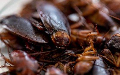 5 Cara Mencegah Kecoa Kembali ke Rumah Anda