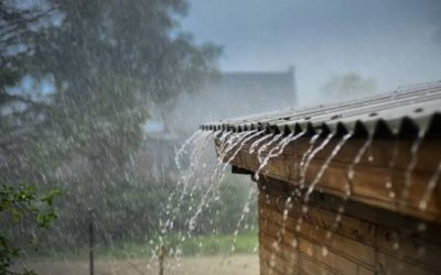 Puncak Musim Hujan, Saatnya Periksa Rumah dari Serangan Rayap