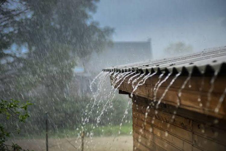 musim hujan populasi rayap