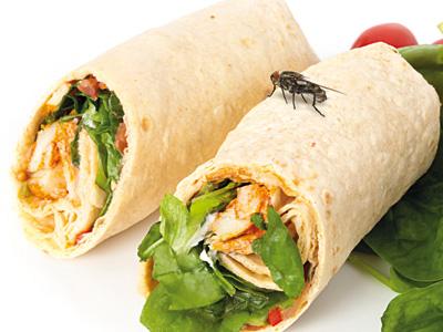 Peran Pengendalian Hama Dalam Food Safety